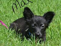Max's story Max is a playful little guy in search of a