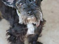 max's story Max is a beautiful loving little boy, hes 8
