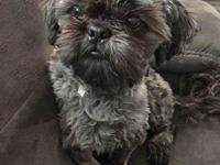 Max, the 10 month old Shih Tzu, is looking for his