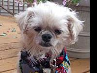 Max's story Meet Max! He is a 2 yo Maltese/Shihtzu mix.
