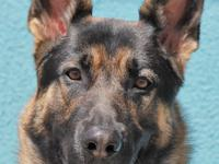 Max von Farrah is a very handsome, 18-month-old large