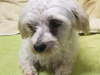 Max Maltese's story ***Meet the dogs at our facility