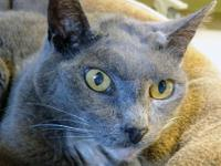 Maxie is a beautiful adult cat who is 5+ years old.