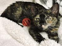Maxie's story Maxie is a sweet, high energy tortie who