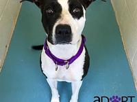 Maxie's story Hi! My name is Maxie and I'm a sweet,