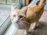 Maximus's story Maximus Breed: Domestic Shorthair mix