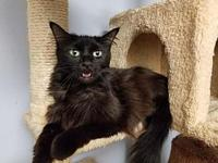 Maxine's story Maxine is a majestic cat with a heart of