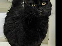 Maxine's story Meow! My name is Maxine and I am the