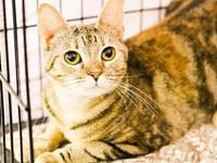 Maxine's story Petite! Friendly! Curious! A big warm