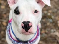 Maxine is a young 8 - 10 month old Pittie mix, about 35