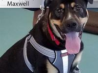 Maxwell's story Hear ye, hear ye! It's adoption day for