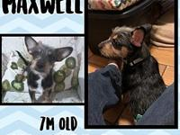Maxwell's story You can fill out an adoption