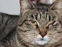 May's story May came to Purrfect Pals as a transfer