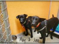 May's story Meet May, here at PCHS with her sister,