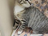 Maya's story We still have kittens available for