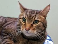 Do you believe in second chances?  Single tabby male,