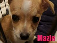 Mazie (pup)'s story Please complete our application