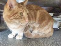 McENTYRE's story Orange tabbies are such sweet cats,