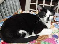 McFluffin's story Sweet, Handsome, Young Black & White