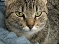 McKenzie's story McKenzie is an undemanding young cat
