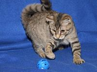 McKenzie (Spayed)'s story McKenzie is a cute female