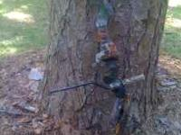 Great condition McPherson Intimidator bow. Call John