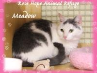ROSE HOPE ANIMAL REFUGE (WATERBURY, CT)  AVAILABLE FOR