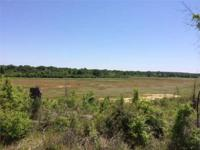 This property consists of 530 acres +/- of 3 year old