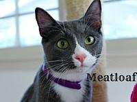 Meatloaf's story The adoption fee is $85.00 with an