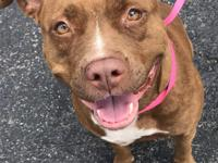 Medusa is a 3 year old beautiful pitt bull terrier. She
