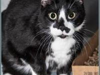 MEEKO's story $97.50 FEE INCLUDES: neutering/spaying,