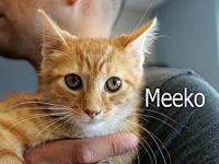 Meeko's story The adoption fee is $85.00 with an