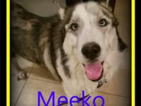 Meeko is a sweet boy that was found running the streets