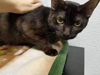 Meeks's story Meeks was surrendered to animal control