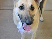 Meg's story Looking for an all around great gal? Look