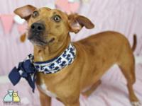 Terrier Mix 3 years old Spayed Female Adoption fee: