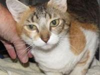 MEGAN's story Megan is a spayed female calico and she's