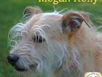 Megan Kelly's story Megan came to us with a litter of 6