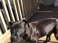 Megan is a young female puppy who is believed to be