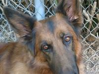 **Mella is part of a bonded pair and will only be
