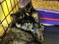 MELODIE is a one year old beautiful tortie who is very