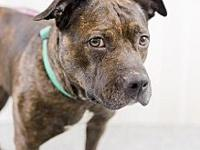 Melody's story Melody is a brindle 1-year-old who came