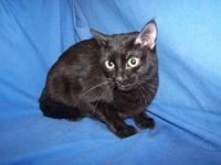 My story I am sweet and loving. I am a black spayed