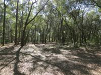 5 Acres of Old Florida. Live oaks and low