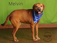 Melvin's story I have a Sponsor Buddy! Part of my