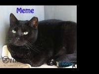 Meme is a 7 year old domestic shorthair who is looking