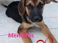 Memphis's story Meet Memphis! She is a German Shepherd