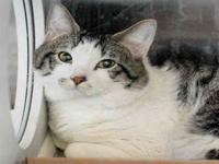 MEO's story Hello! I am a new friend to the Ames Animal