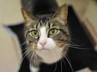 Meow's story I am a wonderful chatty girl who in very