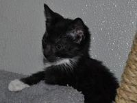 Meowser's story ~~Snuggle Kittens Bottle babies from